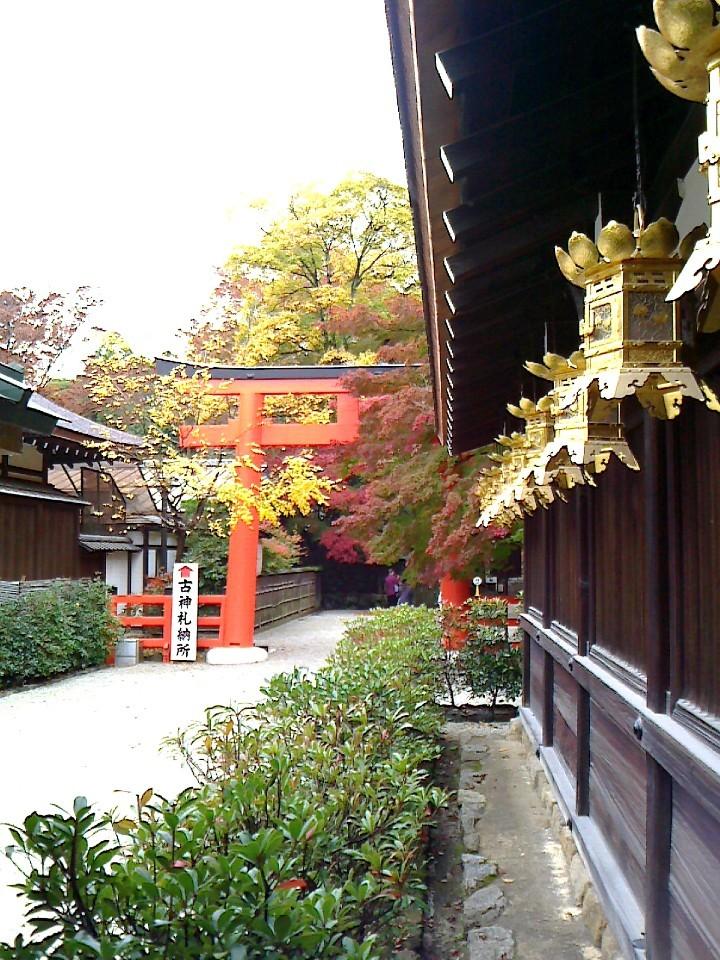 下鴨神社(三井神社外側 他)