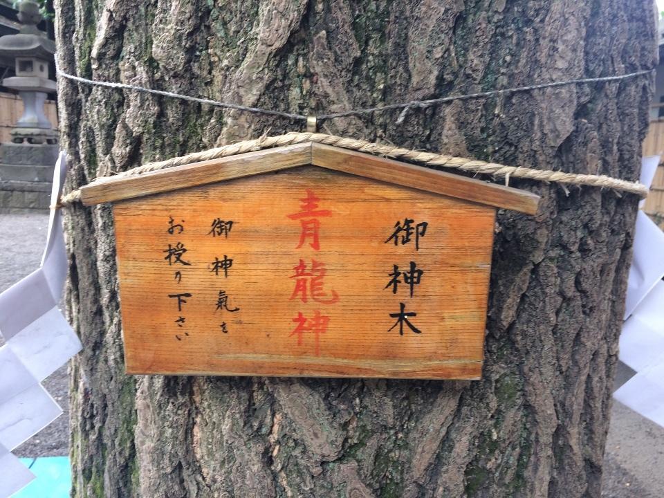 五龍ご神木