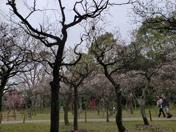 意賀美神社の梅まつり