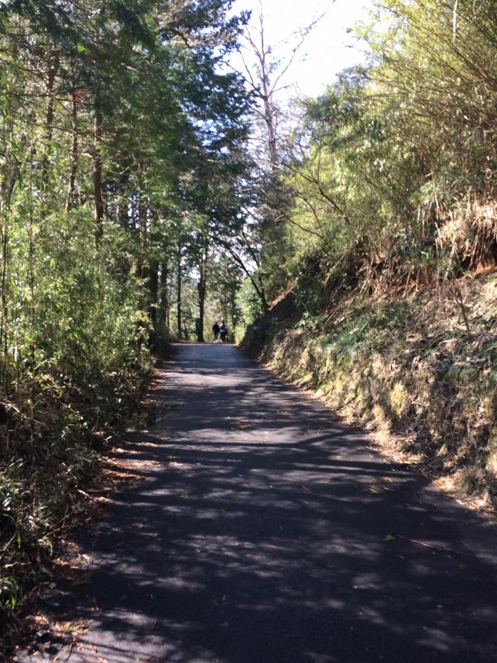 九頭龍神社への道