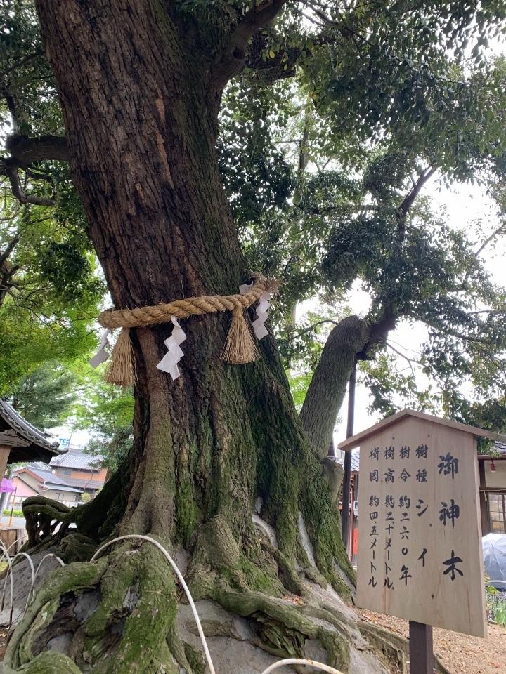 豊川進雄神社のご神木