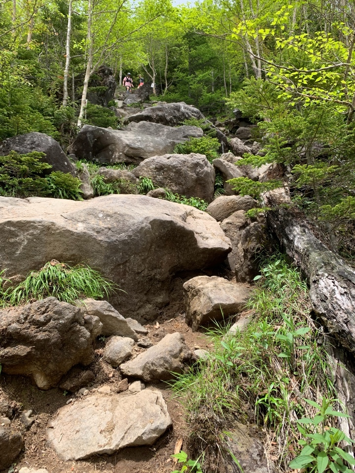岩というより巨石の道