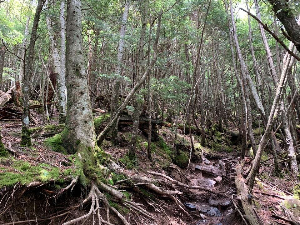 木の根っこの道
