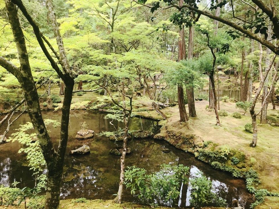 西芳寺(苔寺)で苔の庭園を楽しむ