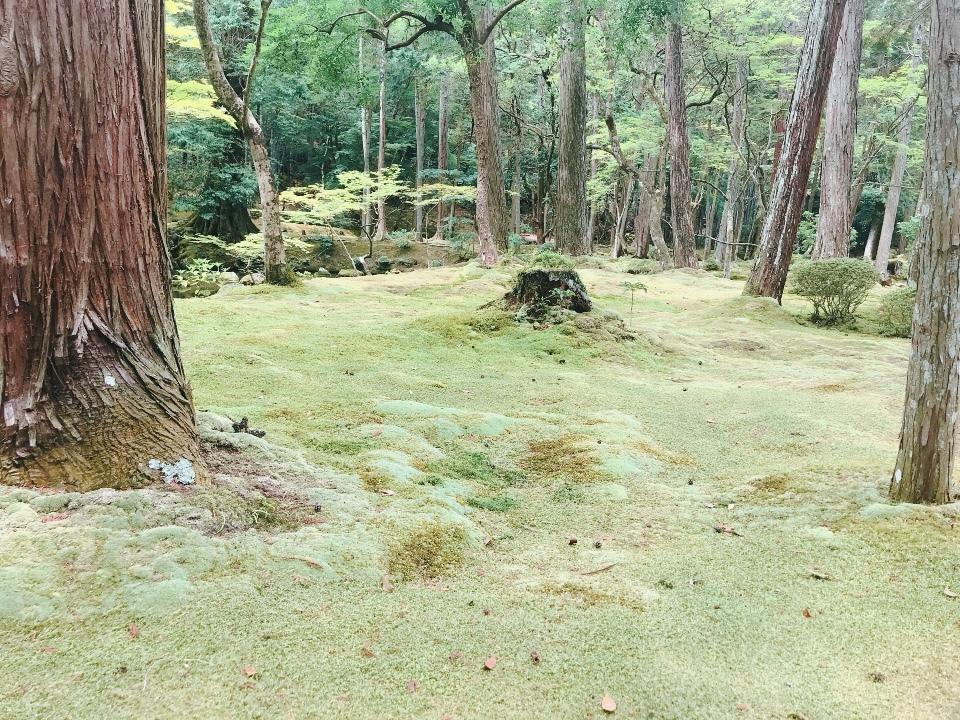 苔寺の美しさ②