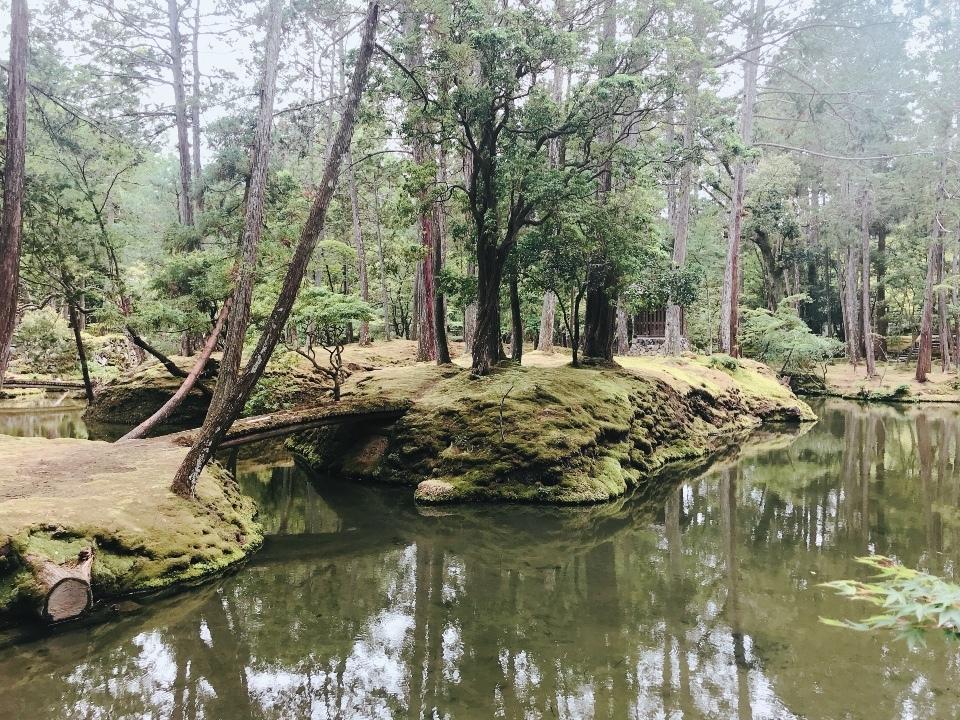 苔寺の美しさ④