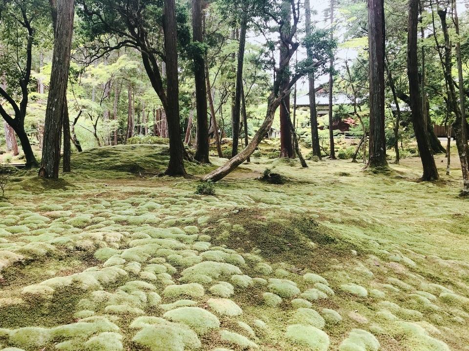 苔寺の美しさ⑤
