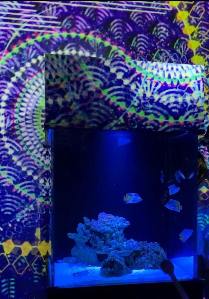 アクアパーク品川…水族館の魚たちとデジタルアート