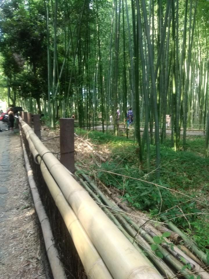 京都嵐山嵯峨野へのんびりと❗