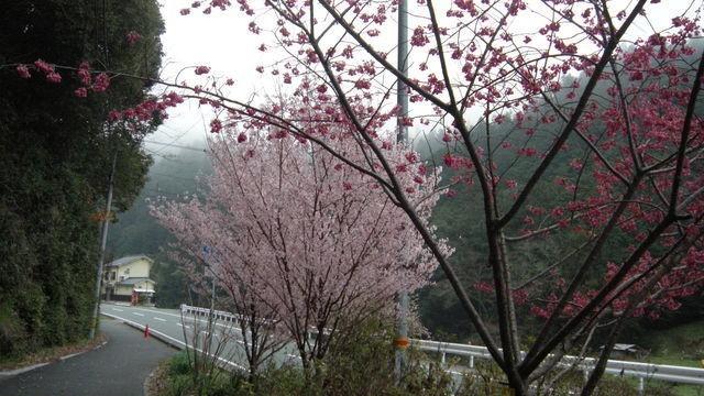 ぴりりと身締まる早春の風