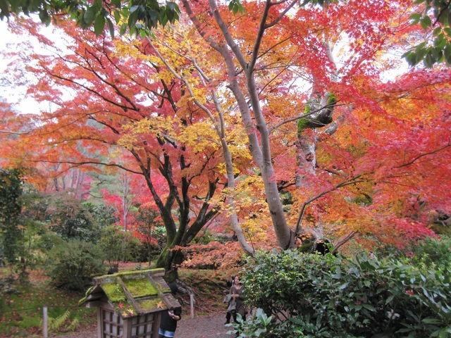 秋色に染まる京都の旅