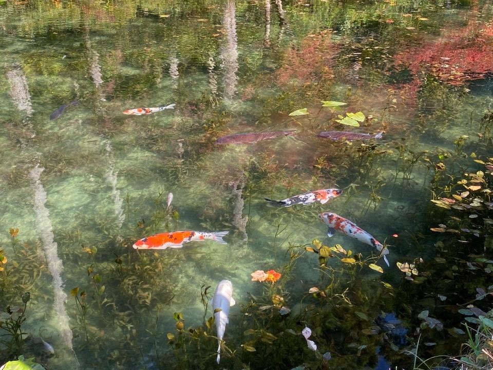 名もなき池、モネの池