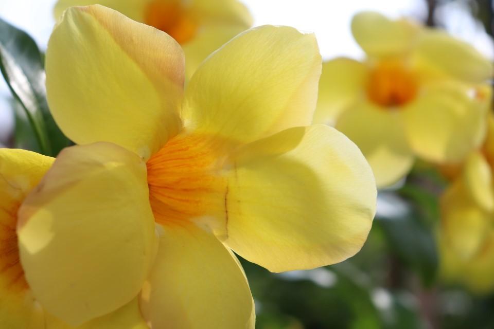 プールサイドのお花たち