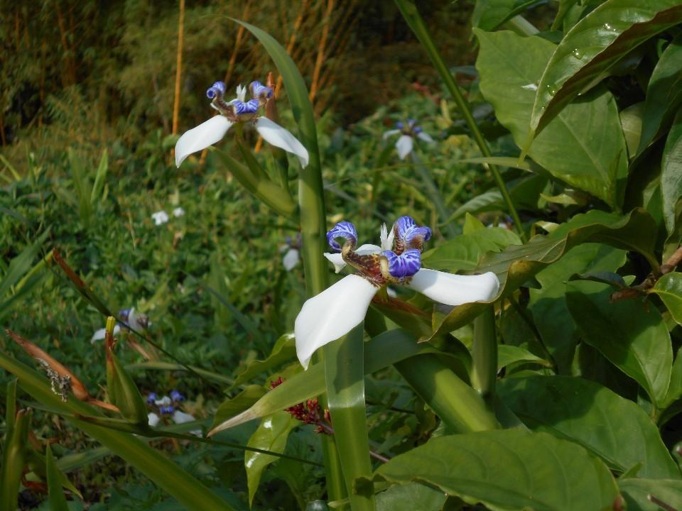 アカカ滝州立公園内トレイルコース内のお花