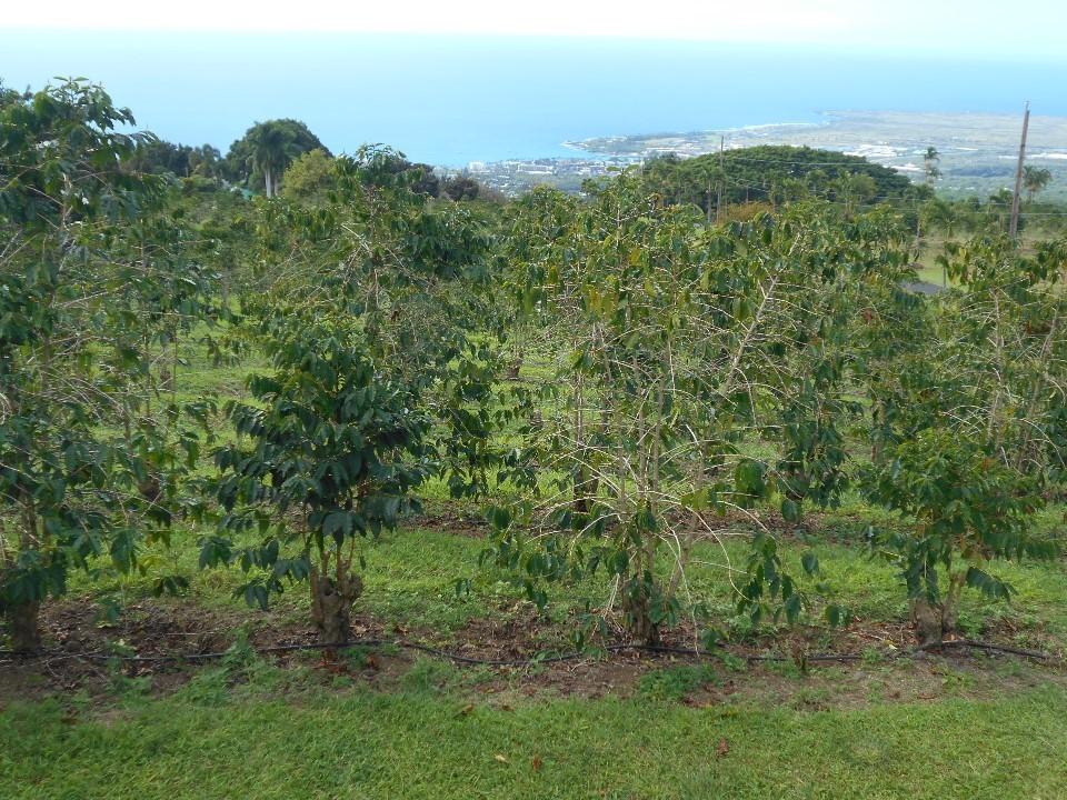 UCCコーヒー自家農園