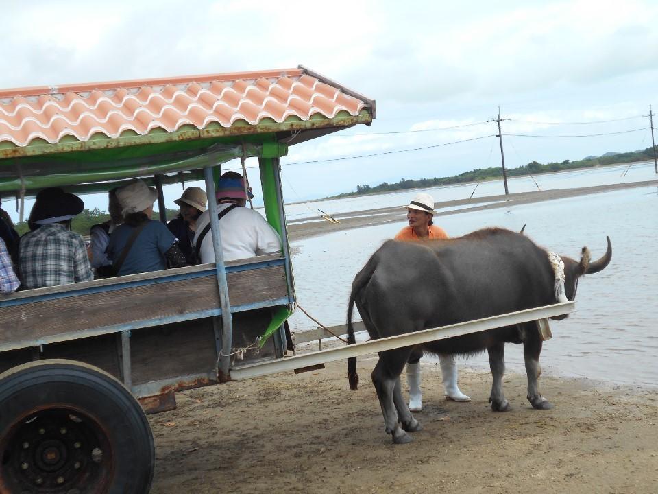 西表島から水牛車で由布島へ