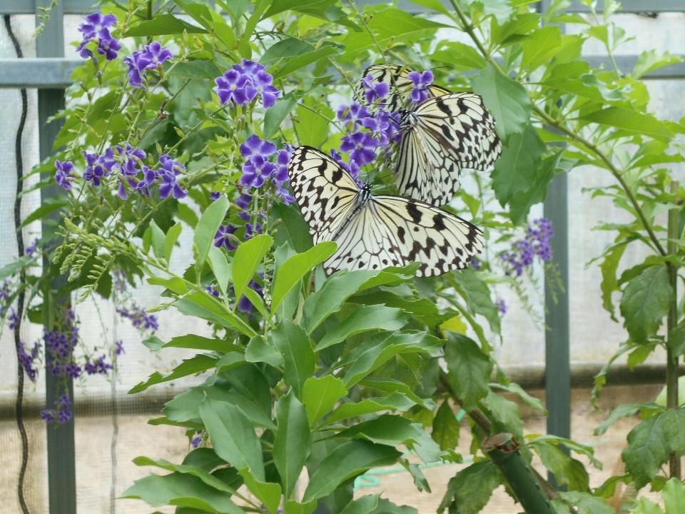 由布島 蝶々園