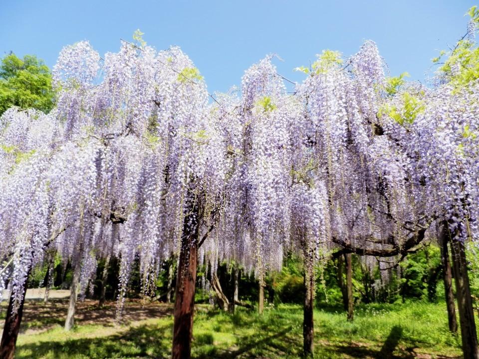 秩父鉄道ぶらり途中下車の旅〈春〉