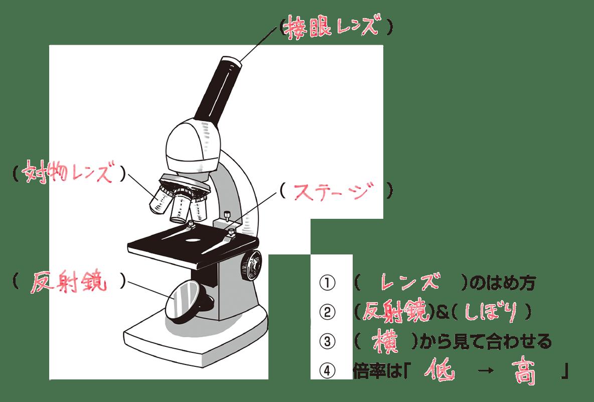 中1 理科生物2 ポイント1・2 左に顕微鏡、右に言葉 答え全部 プレパラート不要