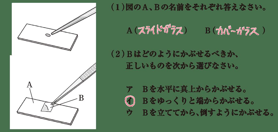 中1 理科生物3 練習1 答え入り