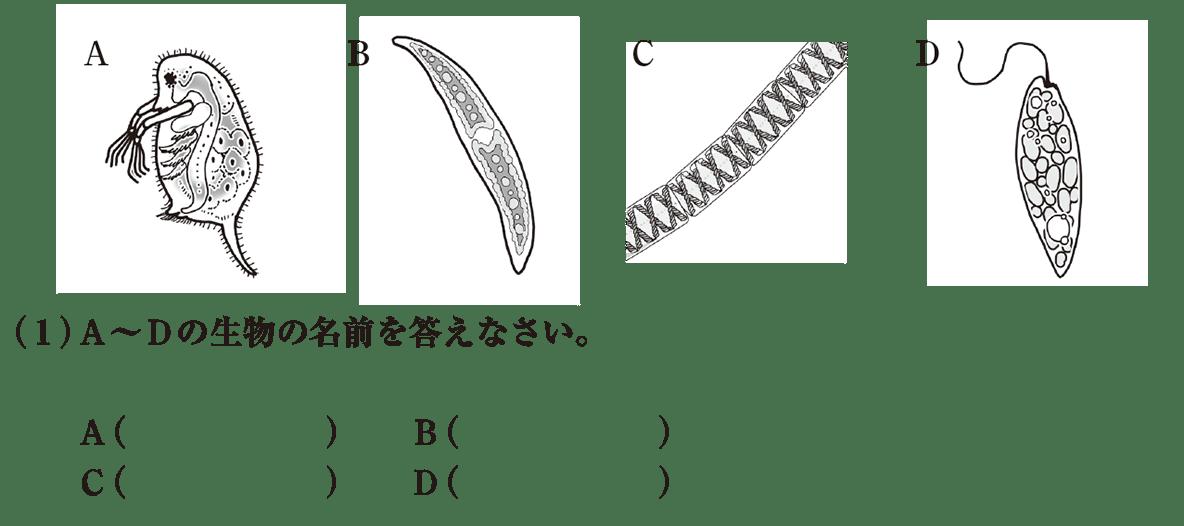 中1理科 生物3 練習2 A~Dと(1)空欄