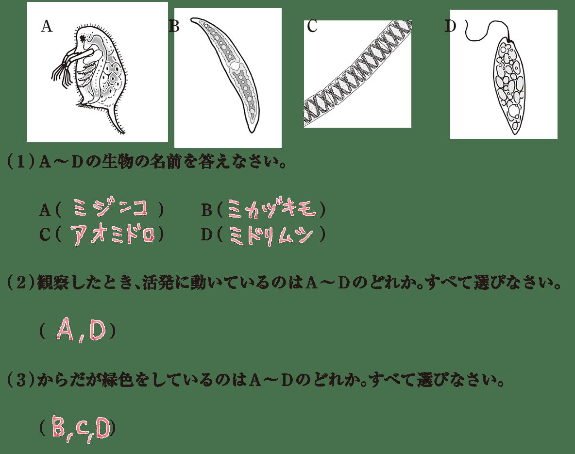 中1理科 生物3 練習2 答え入り