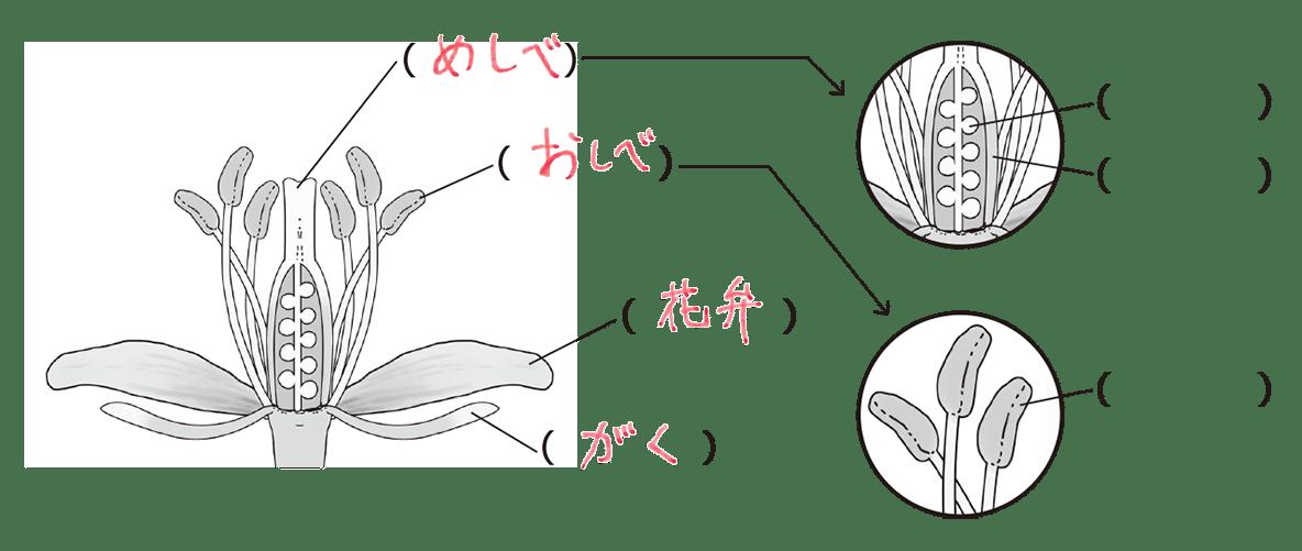 中1 理科生物4 ポイント2 めしべ、おしべ、花弁、がく入る