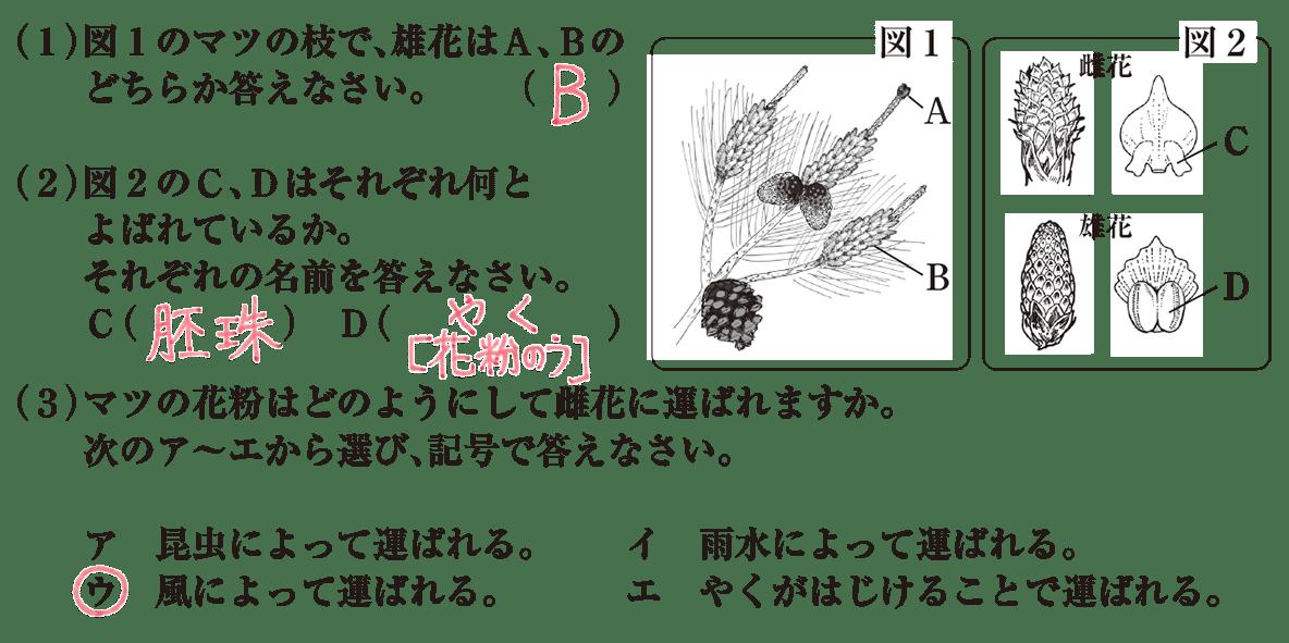 中1 理科生物6 練習1 答え入り