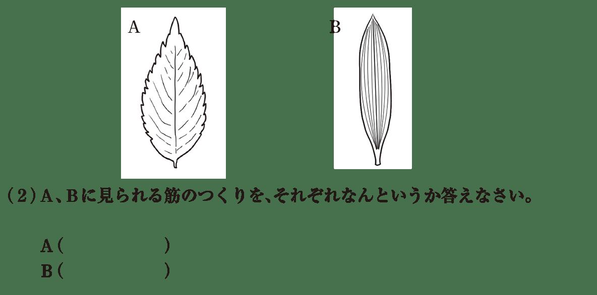 中1 理科生物7 練習1図と(2)答えなし