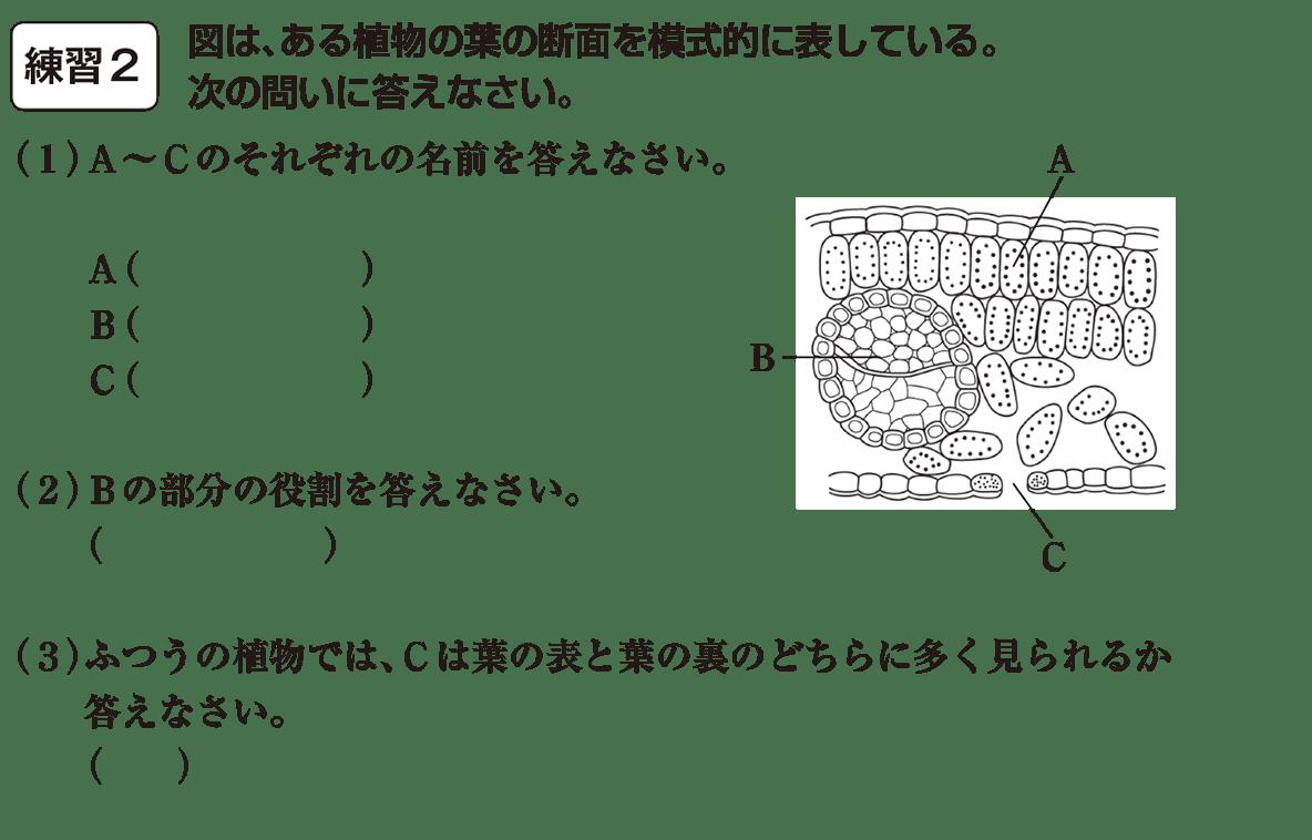 中1 理科7 練習2 カッコ空欄