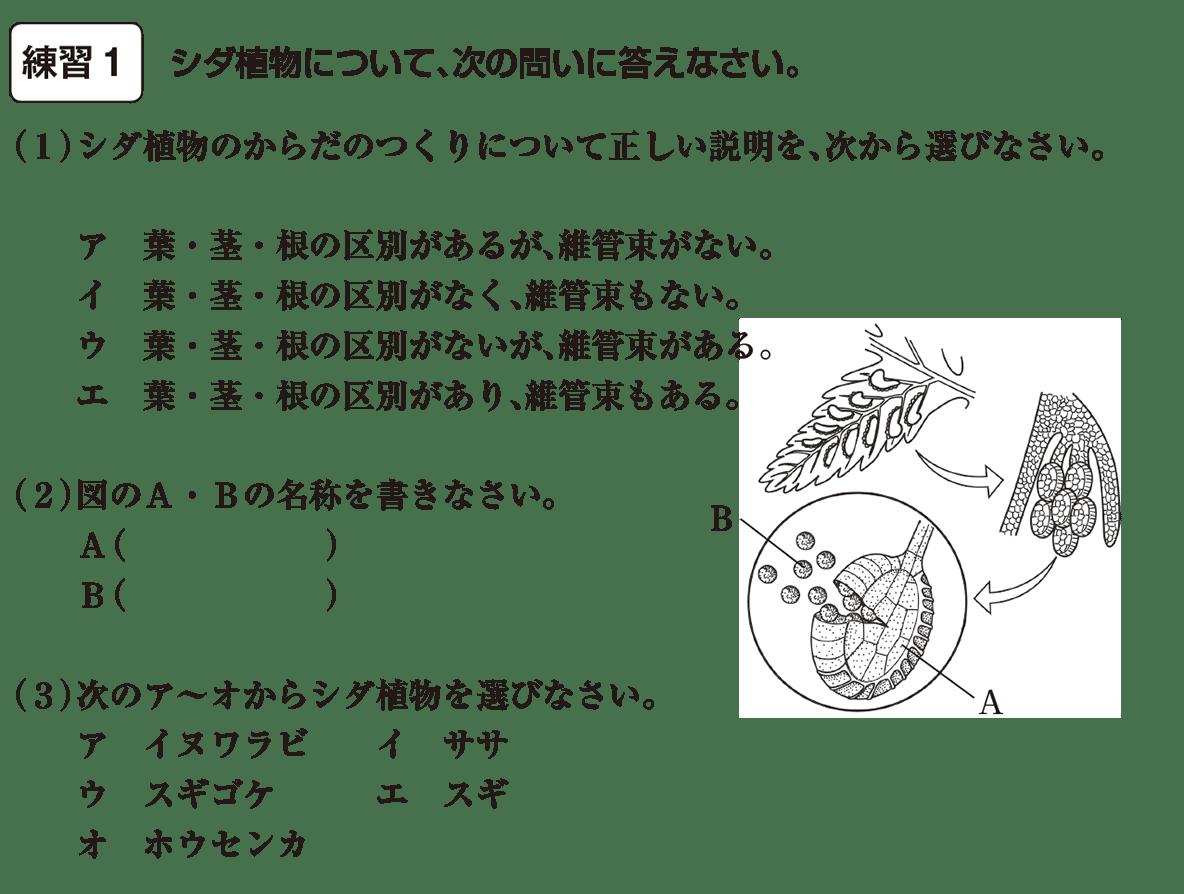 中1 理科生物15練習1(答えなし