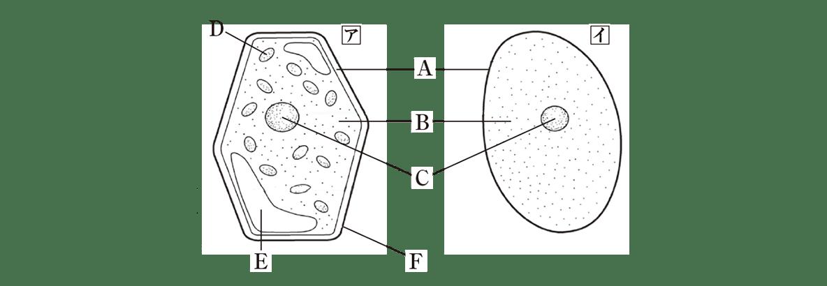 中2 理科生物1 練習1 右の図のみ