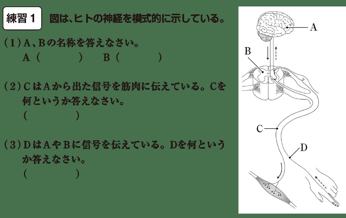 中2 理科生物11 練習1 答えなし