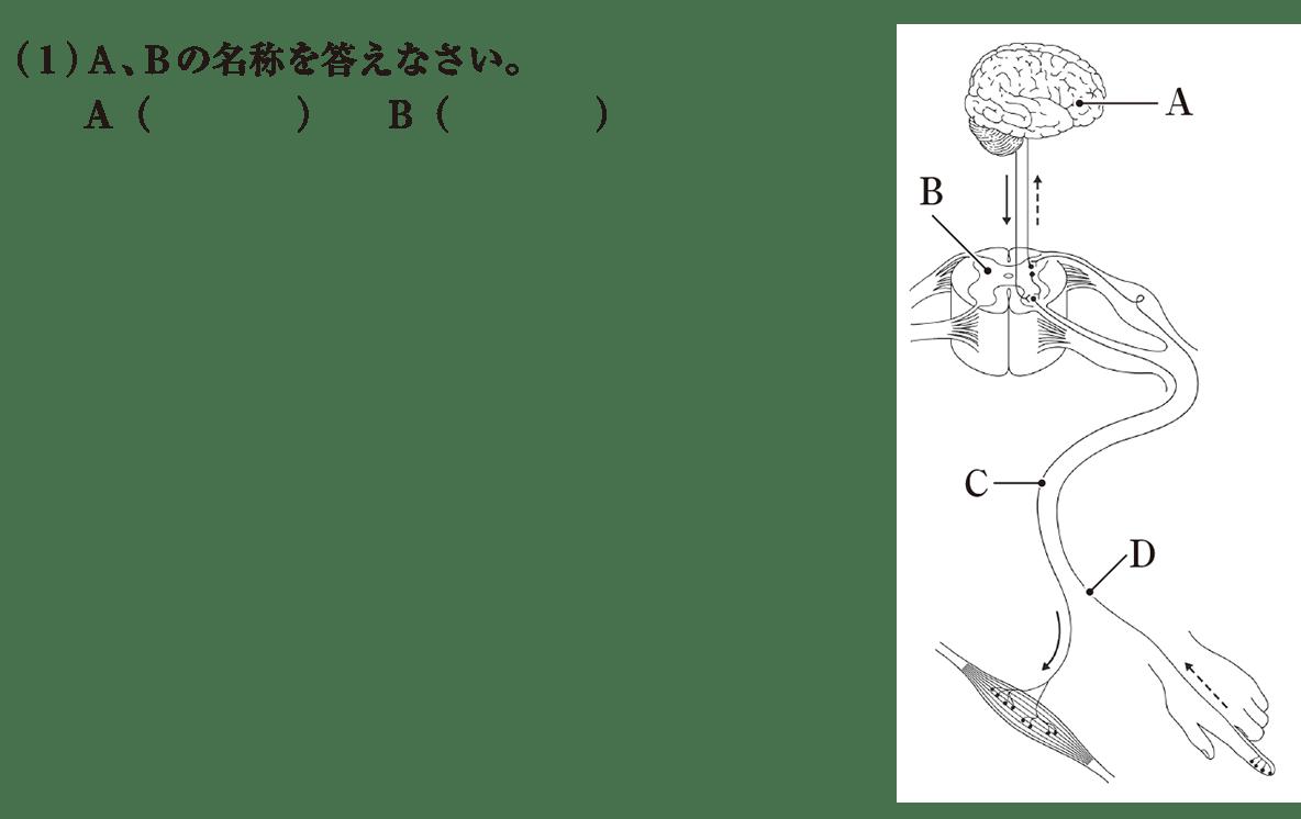 中2 理科生物11 練習1 (1)のみ答えなし