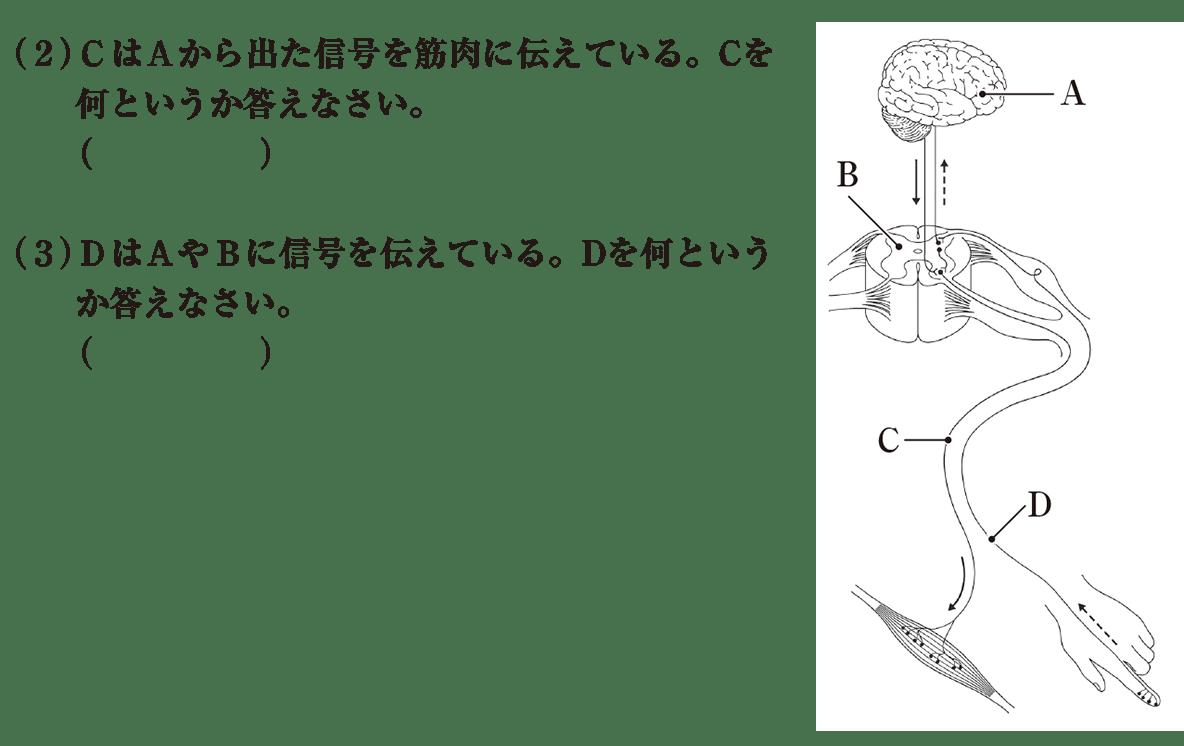 中2 理科生物11 練習1 (2)(3)答えなし
