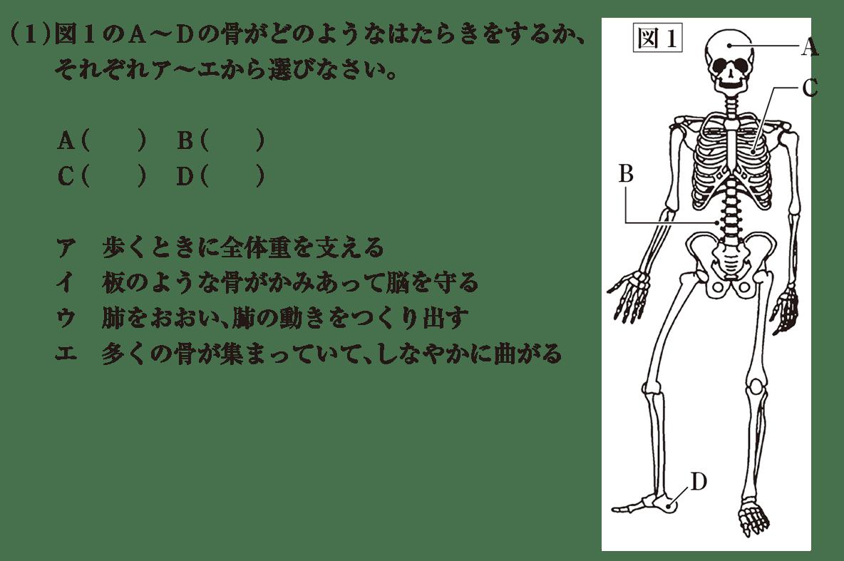 中2 理科生物13 練習 (1)と図1 答えなし