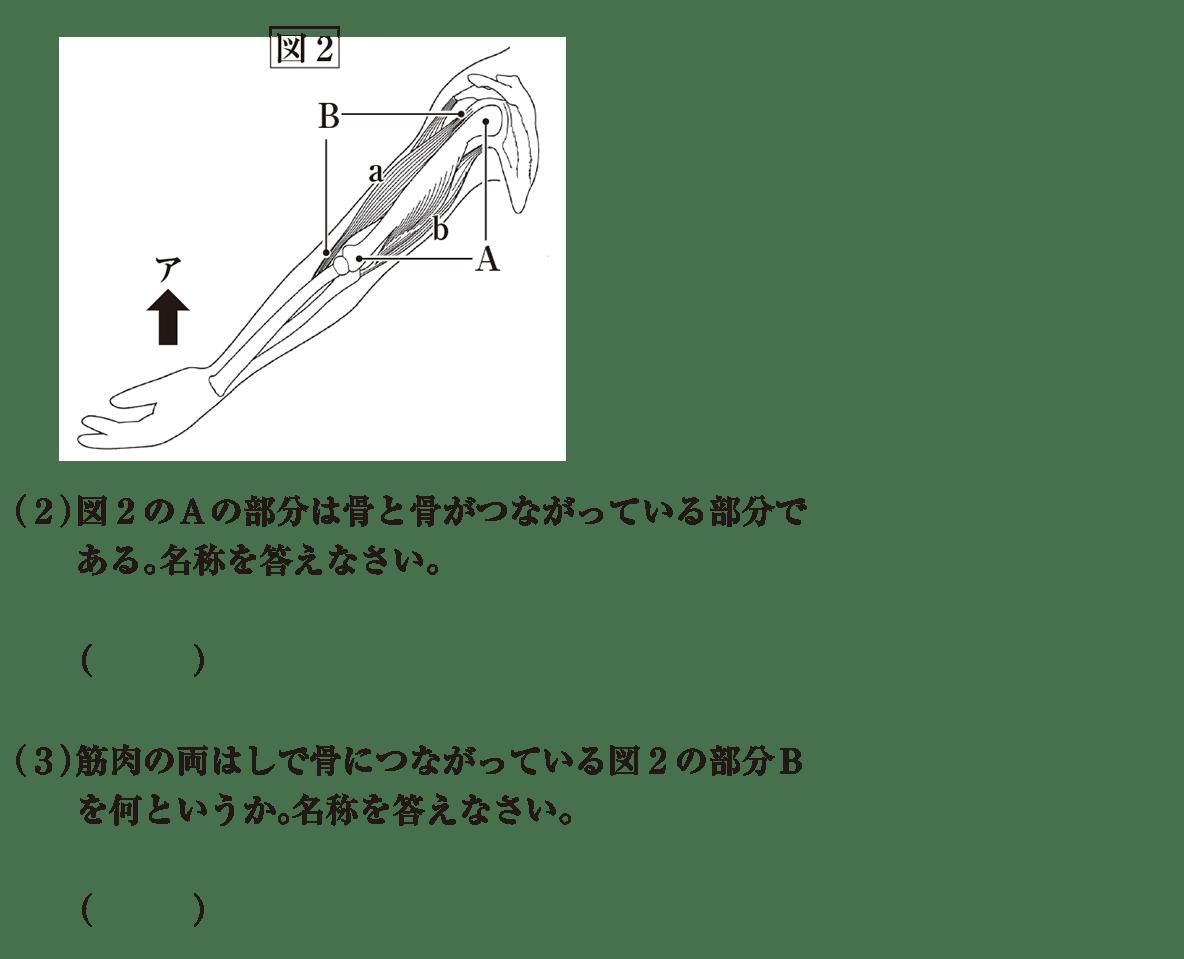 中2 理科生物13 練習 (2)(3)と図2 答えなし