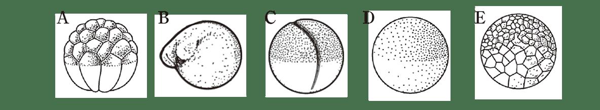 中3 生物6  練習2 A~Eの図のみ表示