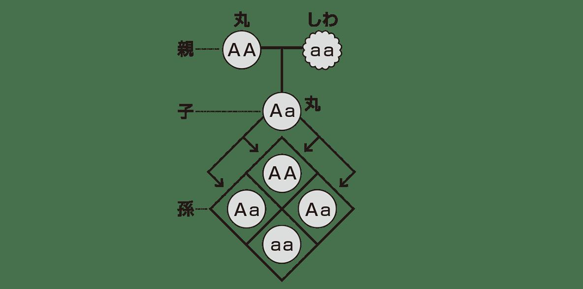 中3 生物9  ポイント1 右の図のみ、左の図と下の1行不要、答え入り
