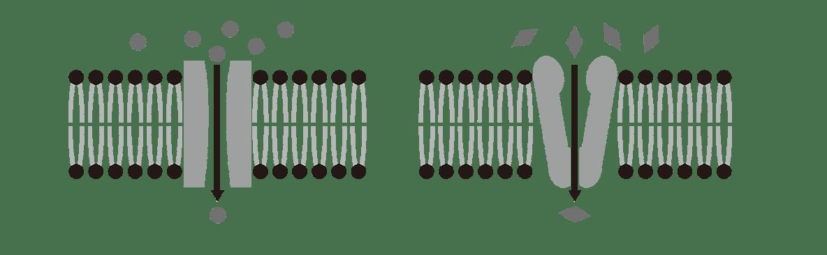 高校 生物 細胞14 ポイント1 図