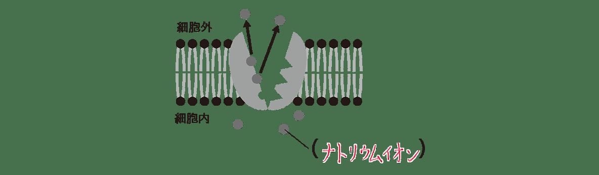 高校 生物 細胞15 ポイント2 左の図 細胞外と細胞内も入れる