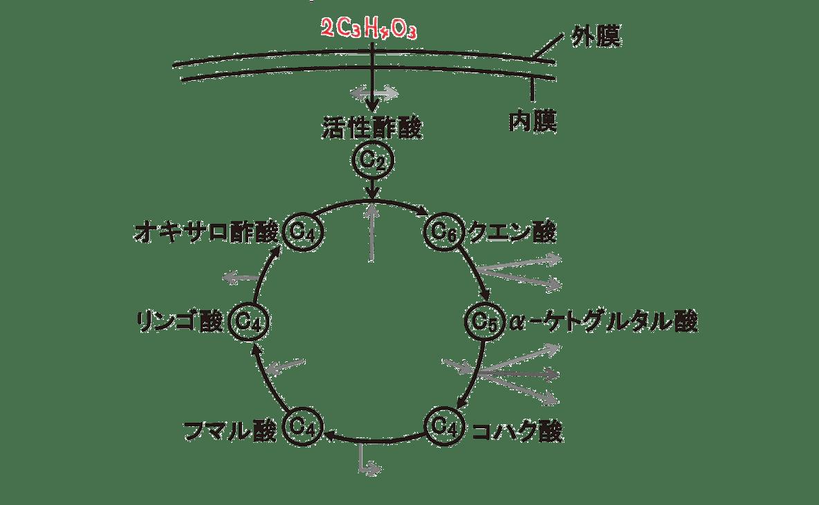 高校 生物 代謝13 ポイント2 図のみ・C3H4O3うめる