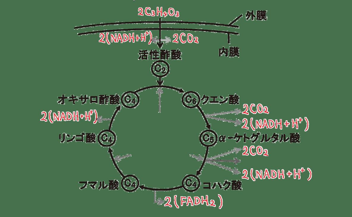 高校 生物 代謝13 ポイント2 図のみ・H2OとATP以外うめる