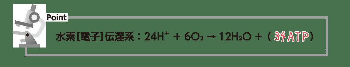 高校 生物 代謝14 ポイント3 下から3行目の式のみ