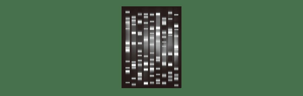 高校 生物 遺伝22 ポイント3 図