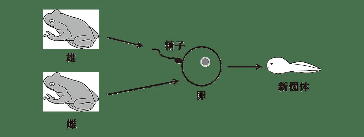 高校 生物 生殖2 ポイント1 図