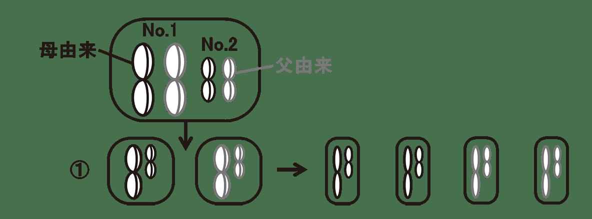 高校 生物 生殖5 ポイント2 左上の細胞の図・①の右側の図すべて