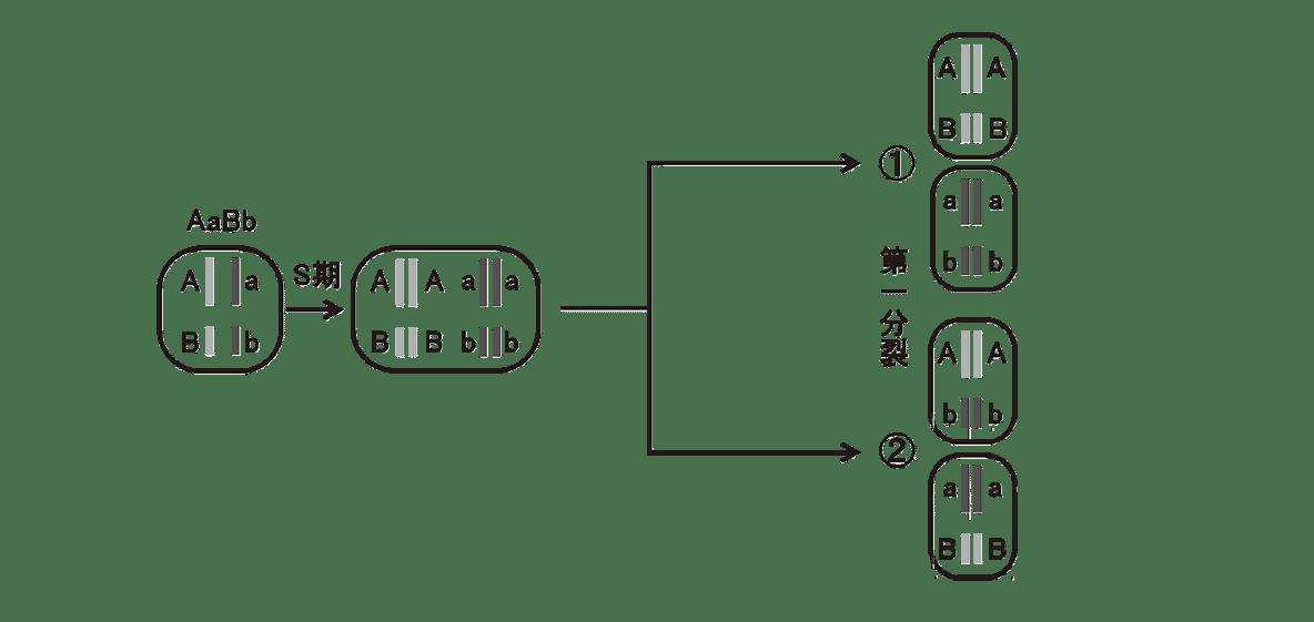 高校 生物 生殖6 ポイント2 左から第一分裂の4つの細胞までの図