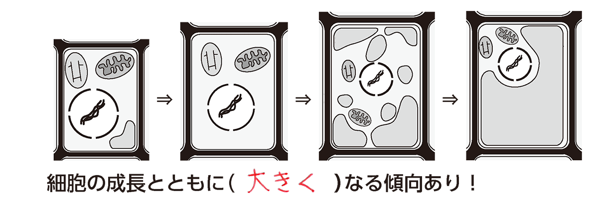 高校 生物基礎 細胞12 ポイント2