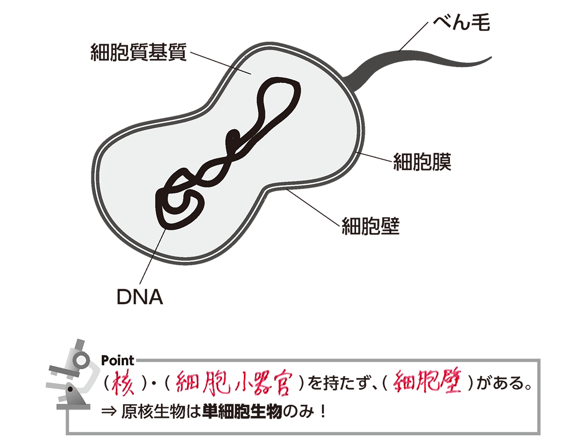 高校 生物基礎 細胞18 ポイント1